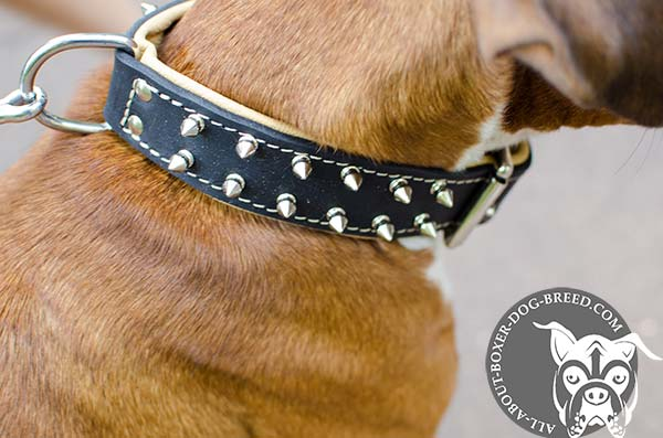 Leather Collar with Nickel Plated D-Ring for Boxer