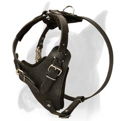 Boxer Harness for exercising