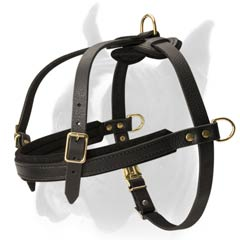 Lightweight Padded Dog Harness