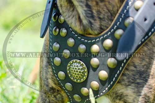 Boxer Leather Harness For Impressive Walking