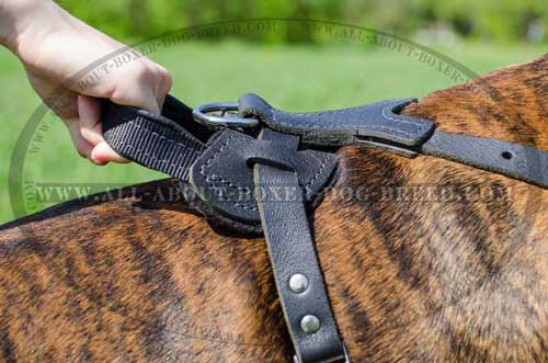Boxer Leather Harness With Water Resistant Hardware