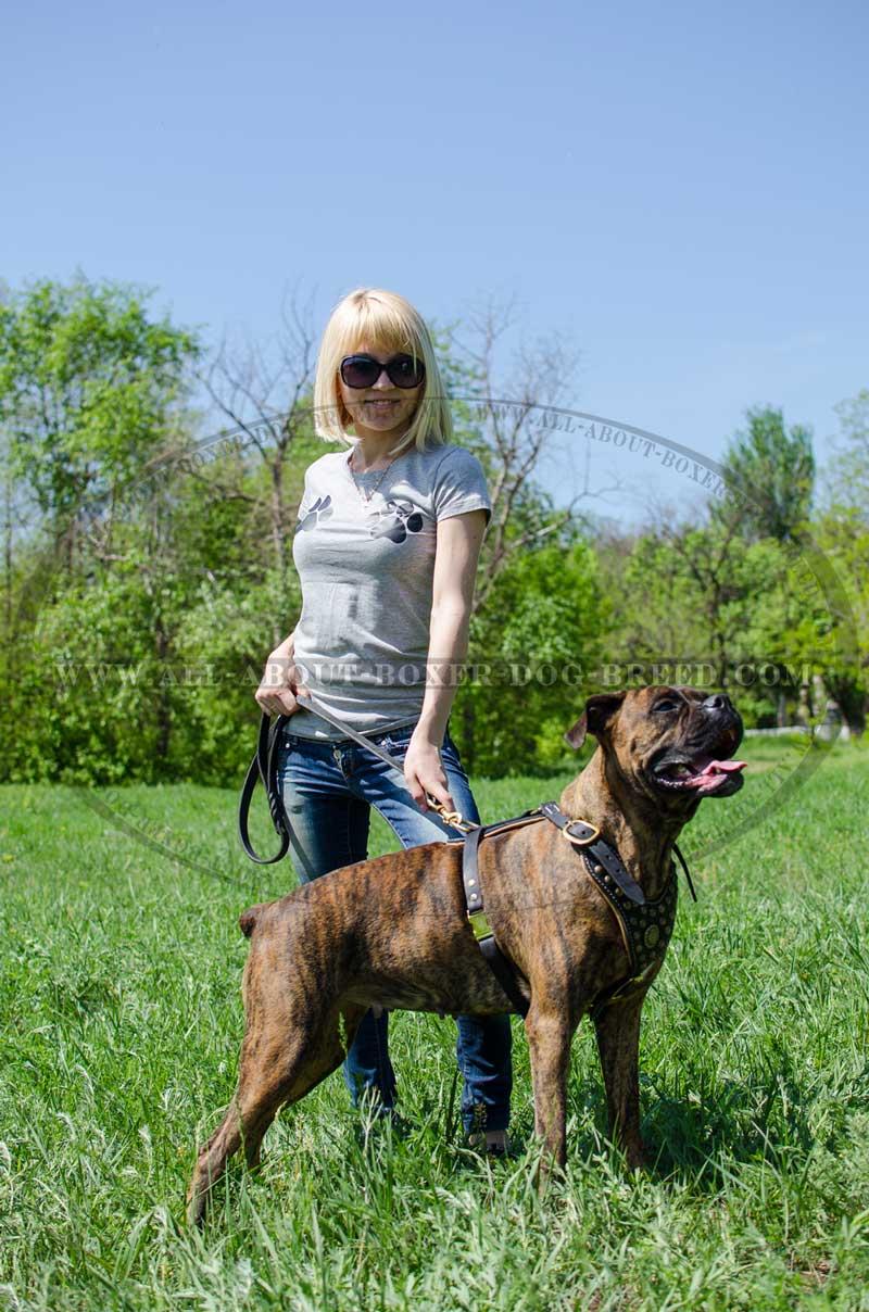 Boxer Dog Collar Size