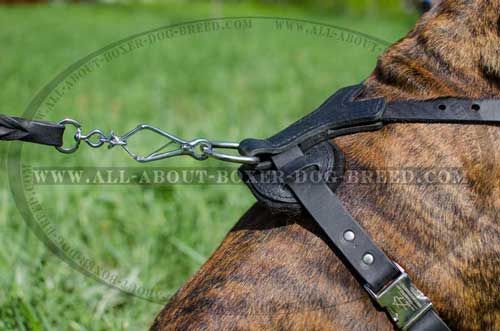 Boxer Leather Harness With Non-Stretching Straps