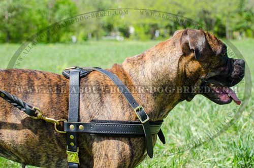 Super Aerated Boxer Leather Harness