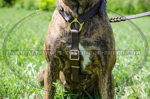 Leather Harness For Successful Boxer Trainings