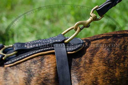 Boxer Leather Harness Carefully And Softly Padded