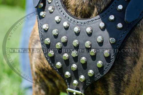Presentable Boxer Leather Harness