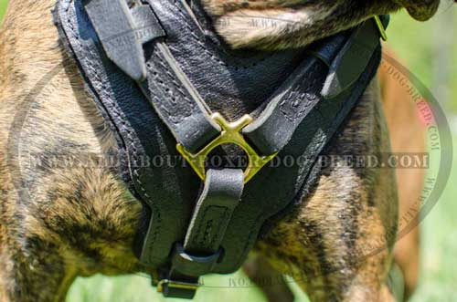 Boxer Leather Harness Classically Designed