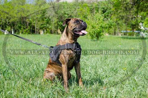 Nylon Harness For Boxer's Tracking