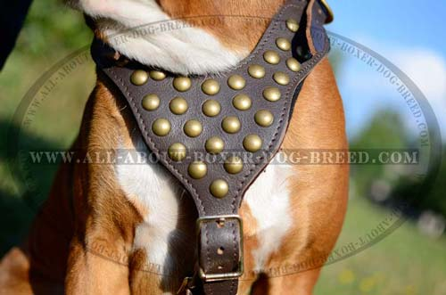 Exclusive Dog Harness with Studs