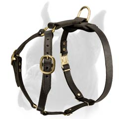 Dog Harness of Fascinating design
