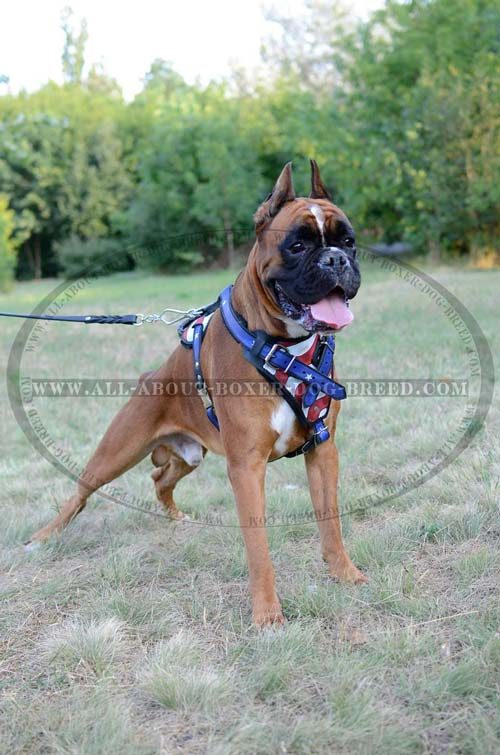 Perfect Boxer Dog Harness for training