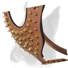 Harness decorated with Gold-like spikes