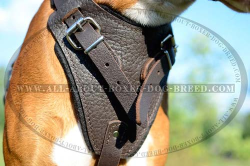 Safe Dog Harness for Boxer Dog