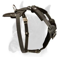 Felt padded Leather Harness