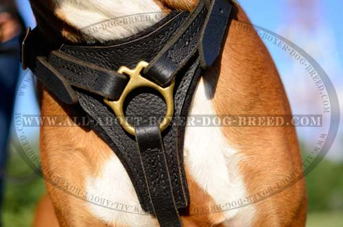 Exclusive Dog Harness for attack/agitation training
