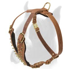 Harness with Rust-proof Brass hardware