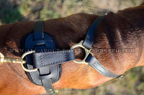 Harness with Quick release buckle