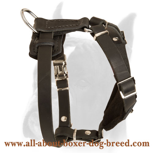 Leather Harness with handle to walk Boxer