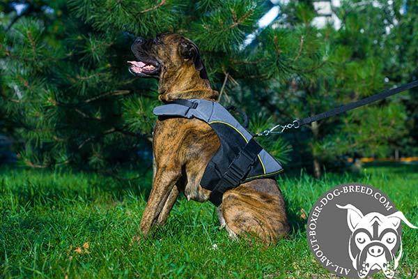 Boxer nylon harness with strong quick release buckle for any weather walks