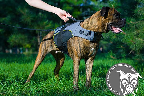 Boxer nylon harness of any weather material with handle for rehabilitation