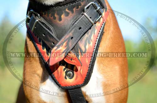 Genuine Leather Agitation/Attack Training Harness with Exclusive Pattern for Boxers