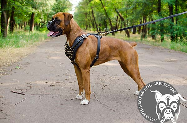 Reliable Leather Boxer Harness for Any Activity