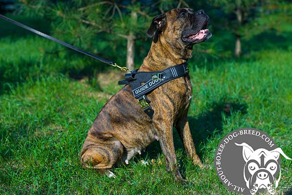 Boxer Guide Harness with 2 Ply Leather Front Chest Strap