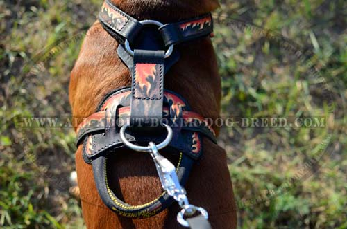 Strong Agitation Training Harness Made of Genuine Full Grain Leather