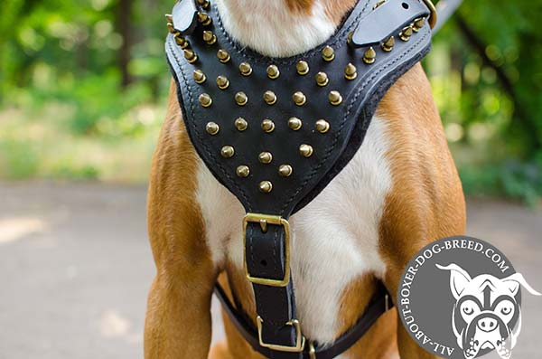 Decorated Leather Boxer Harness