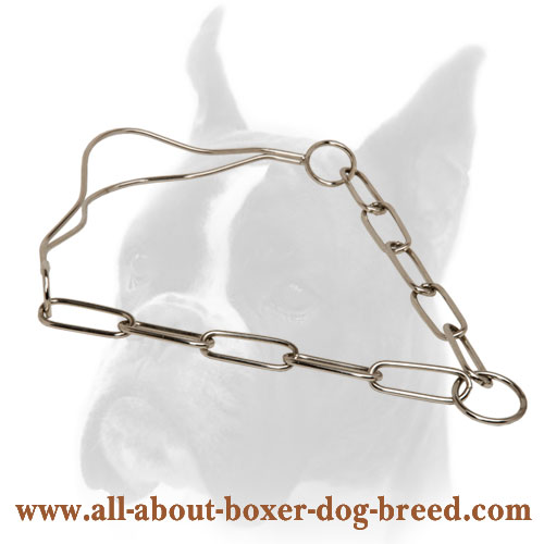 Chrome Plated Dog Show Collar for Boxer