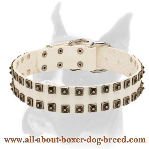 Wide Boxer Collar of White Leather with Two Rows of Old Nickel Studs