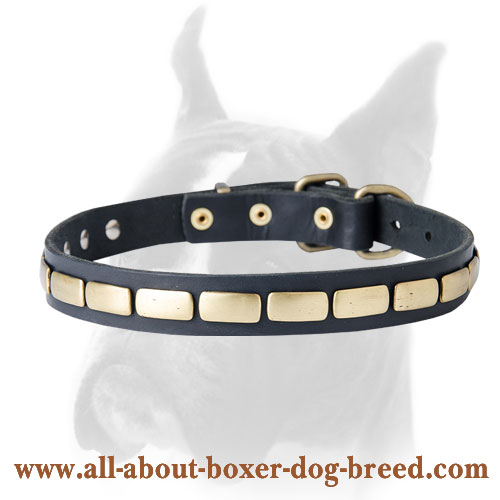 Wonderful leather Boxer collar with plates