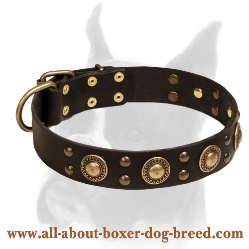 Space-like Boxer Leather Collar with Brass Studs