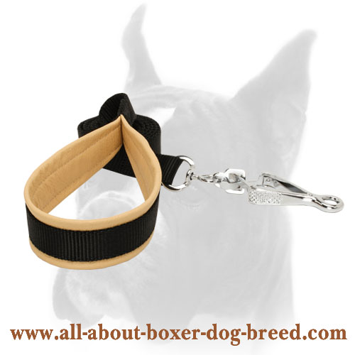 Boxer leash with padded handle for daily activities