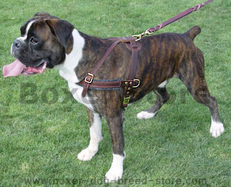 Boxer Tracking / Pulling / Agitation Leather Dog Harness For Boxer - Click Image to Close