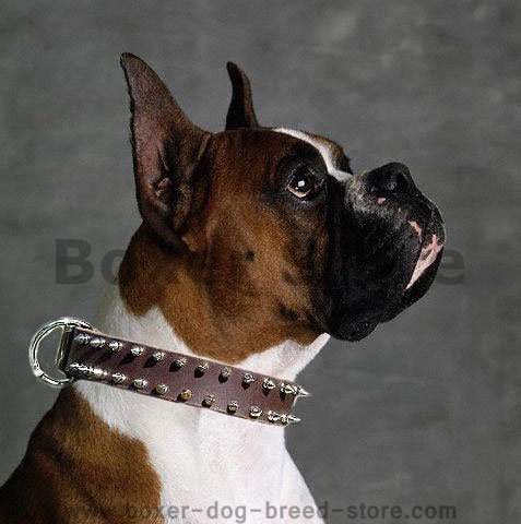 Bulldog Leather Spiked Dog Collar - Boxer dog collar - Click Image to Close