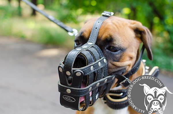 Leather Boxer Muzzle with Adjustable Straps