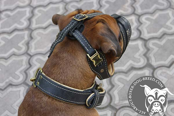 Quick Release Buckle on Leather Boxer Muzzle
