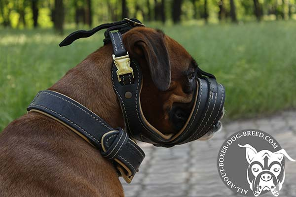 Boxer leather muzzle of high quality padded with Nappa leather for utmost comfort