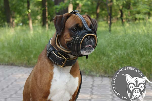 Boxer leather muzzle easy-to-adjust with riveted hardware for daily walks