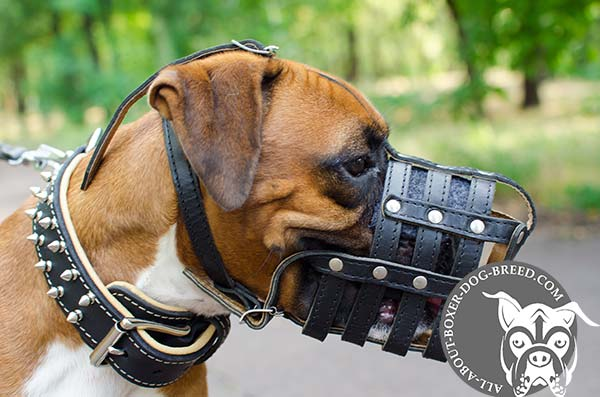 Reliable Leather Boxer Muzzle with Padding for the Nose