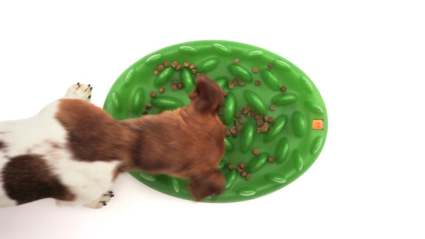 Interactive Boxer pet feeder