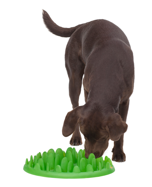 Plastic interactive Boxer dog feeder