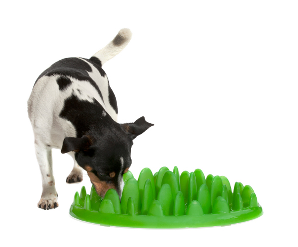 Plastic Boxer dog feeder