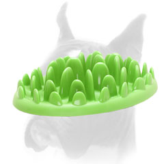Interactive gren grass shaped Boxer feeder