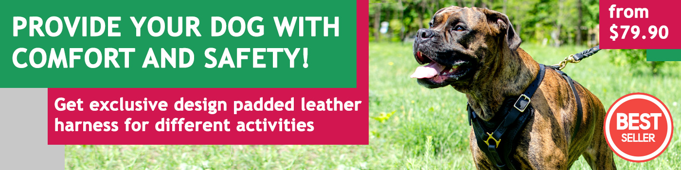 Exclusive Handcrafted Boxer Dog Harness for Successful training
